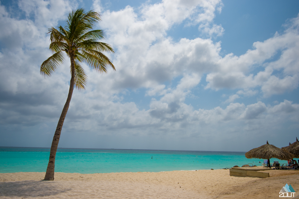 Palmtree Aruba
