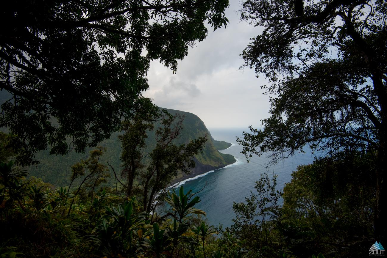 Muliwai Trail, Kohala Forest Reserve