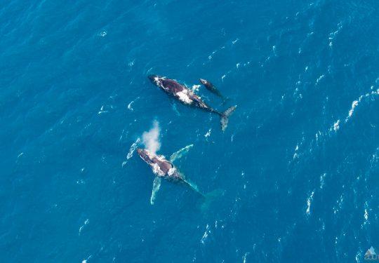 Walvissen in Hawaii