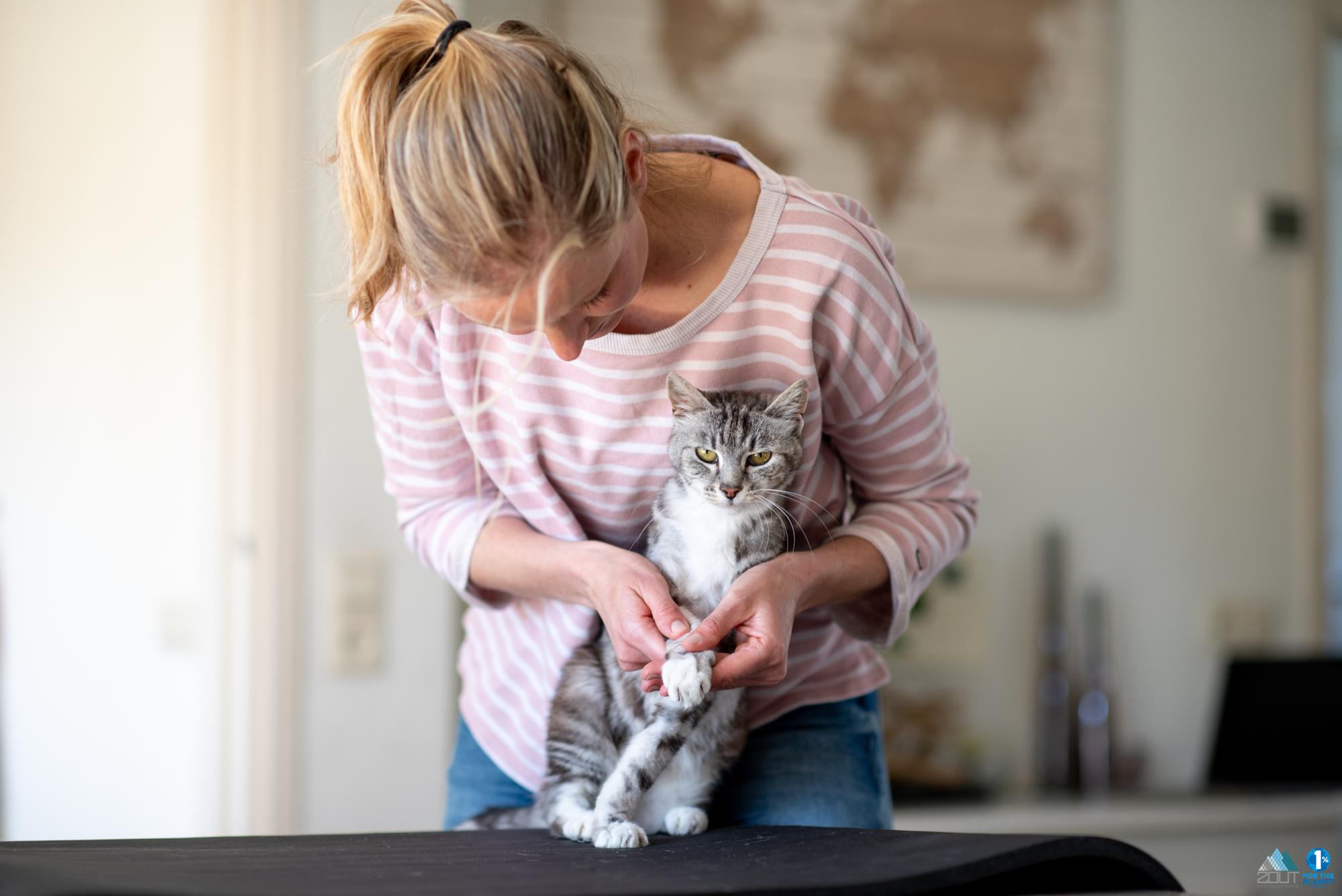Fotografie dierenfysiotherapie naomi meijaard katten